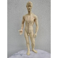 Modelis, manekenas akupunktūros. Vokietija. Aukštis 55 cm. Kaina 87