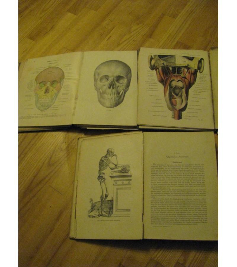 Anatomijos vadovelis. 1942 m. Kaina 11 Eur.